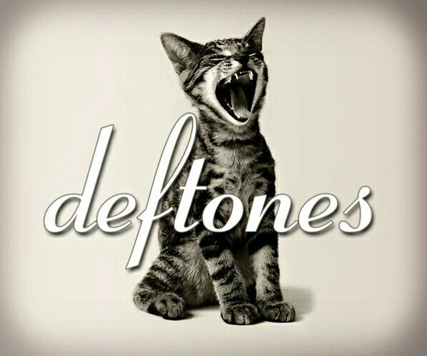 Deftones Cat Music Wallpaper My Favorite Music Rock Music