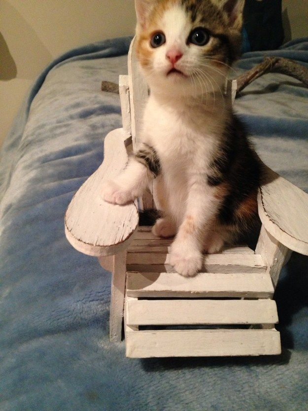 This proud guy in his very own kitten-sized beach chair. | 39 Overly Adorable Kittens To Brighten Your Day