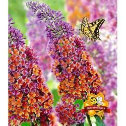 Blumen & Pflanzen #immergrünesträucher