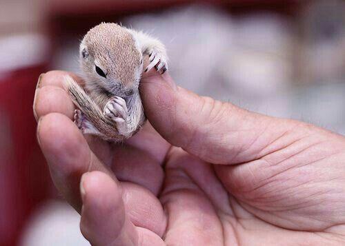 Precious Baby Squirrel Cute Animals Cute Baby Animals