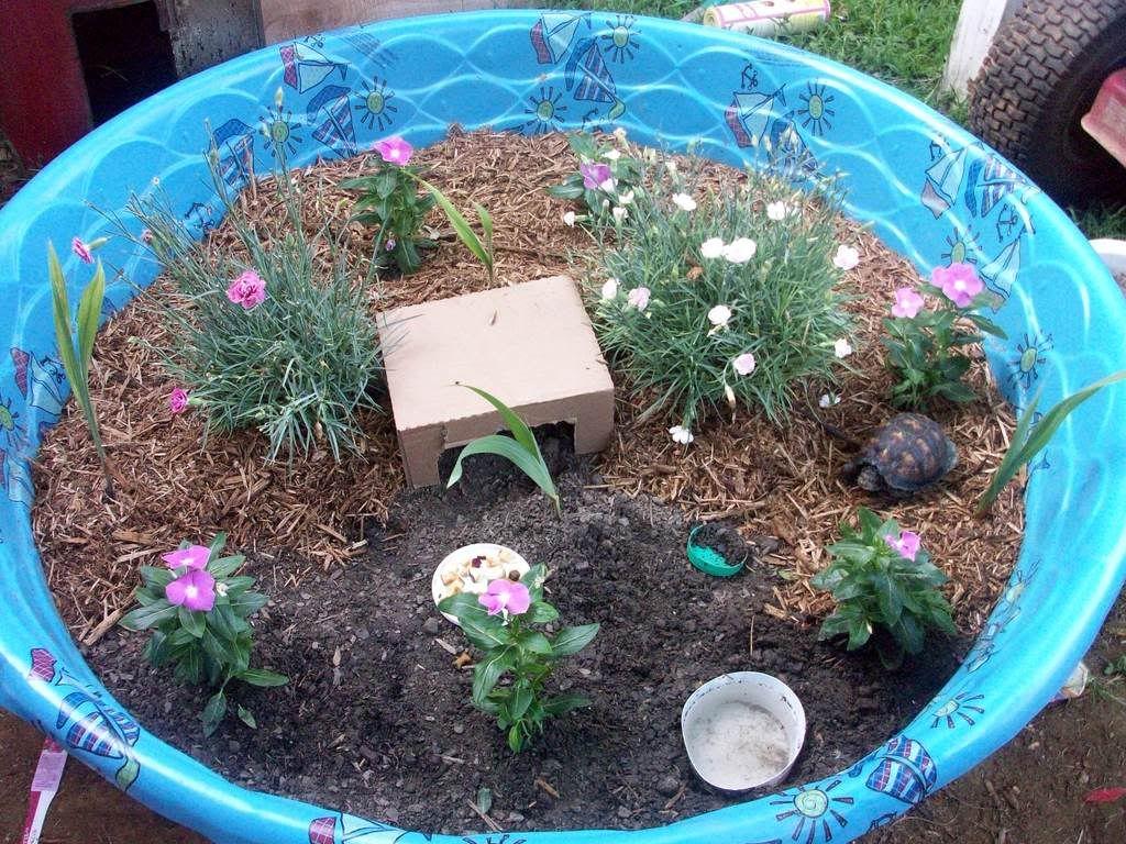 Kiddie Pool Vegetable Garden