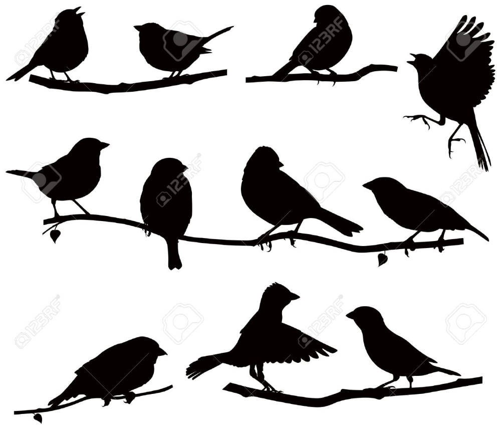 vektoren silhouetten der vögel auf einem ast  vögel