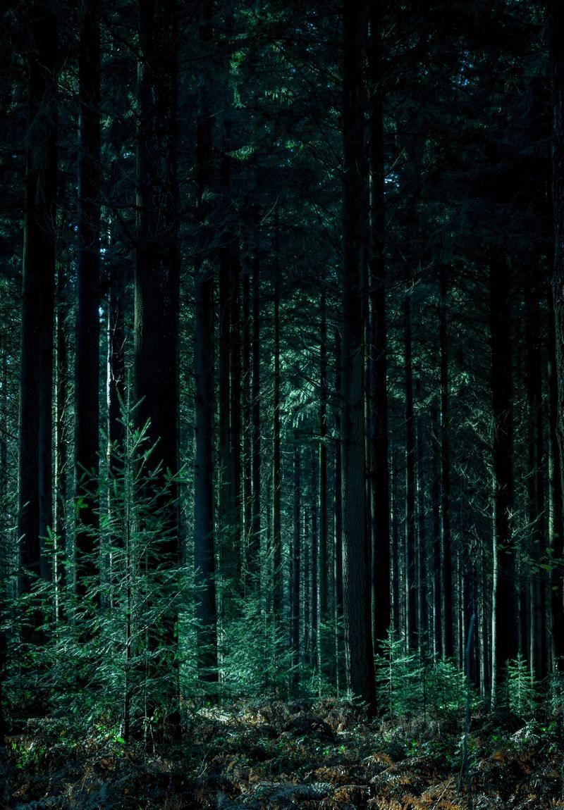 Wallpaper Day forest, trunks, trees, green for HD, 4K