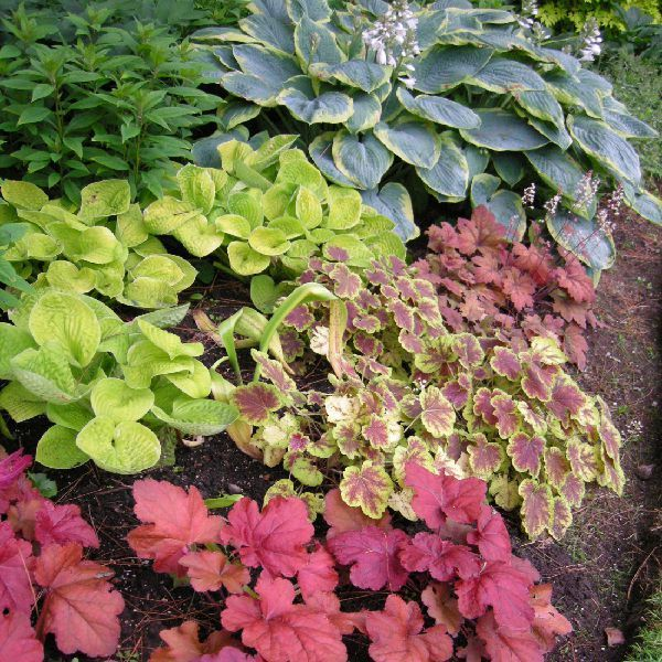 Exploring the Price Gains for Bitcoin and Ethereum for Shade Perennials for Shade - Plant Paradise Country Gardens - Organic Garden Centre CaledonPerennials for Shade - Plant Paradise Country Gardens - Organic Garden Centre Caledon