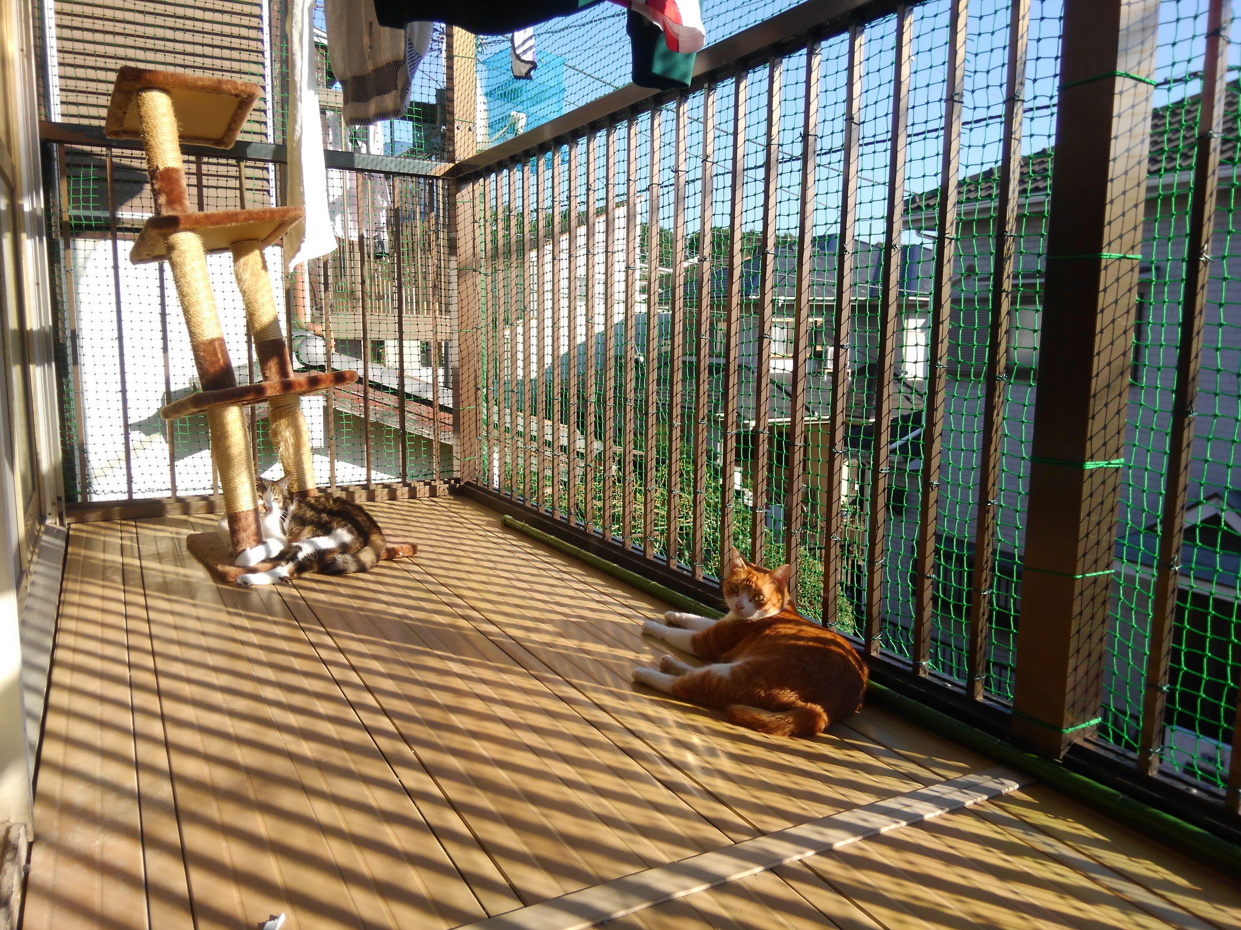 ベランダを猫仕様に ネットでかこいました ひなたぼっこ ベランダ ネット 猫の屋外ケージ 猫の遊び場