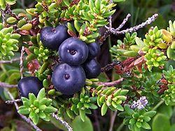 Empetrum nigrum Kansanomaiselta nimeltään  variksenmarja tunnetaan myös karhunmarjana, joka voi kuitenkin tarkoittaa myös sudenmarjaa. Sen lisäksi sitä kutsutaan joskus tunturimustikaksi.