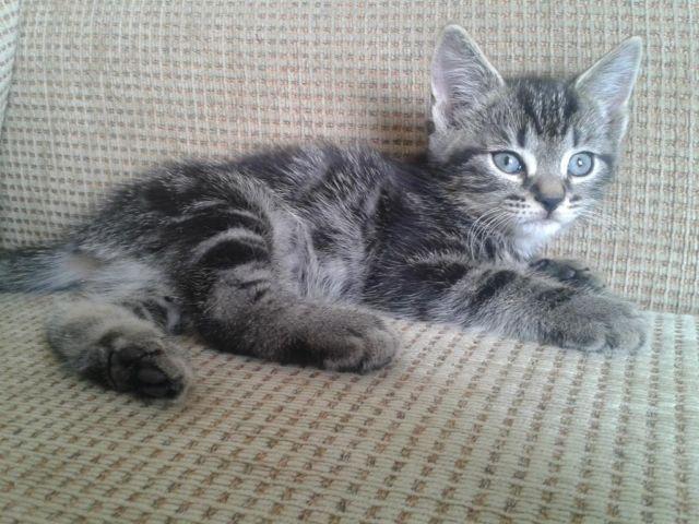 Kittens! Kittens