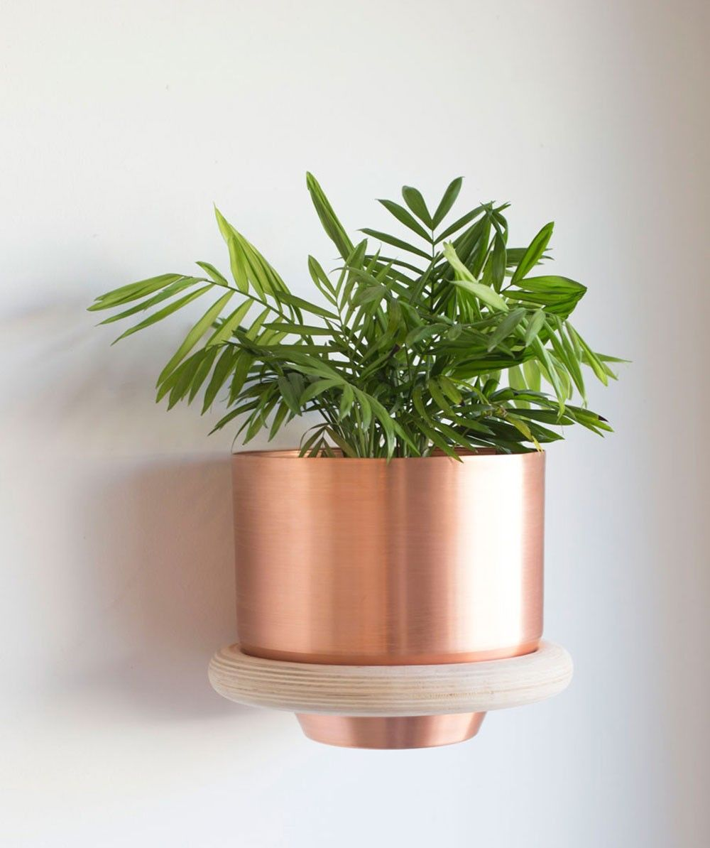 Wall mounted ring plant holder possibly beside the door dimensions