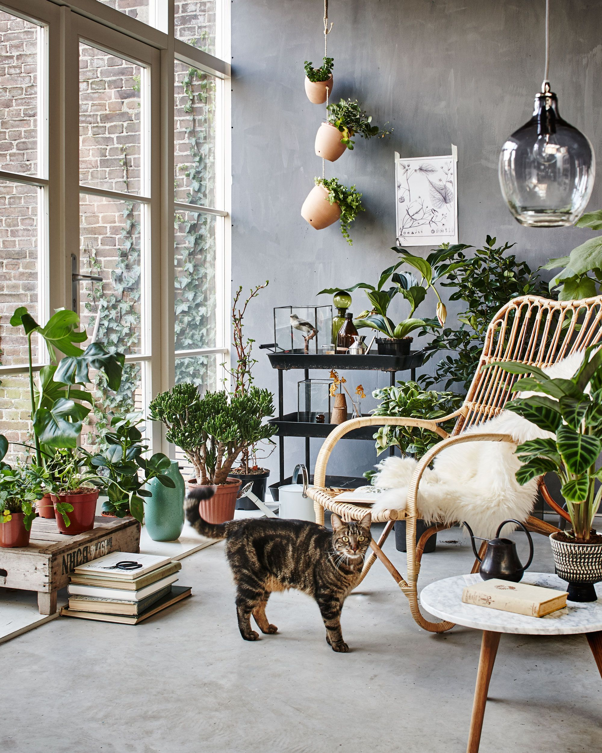 Living Room Flowers Pictures Ideas Botanic Orangery With A Rattan Chair Plants And Cat Styling Fietje Bruijn Marianne Luning Frans Uyterlinde Vtwonen June 2015