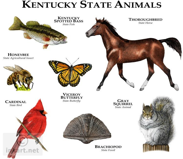 Kentucky State Animals Full Color