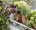 Essbare Pflanzen, Blumen, Blüten und Wildpflanzen #kräutergartenbalkon Essbare Pflanzen, Blumen, Blüten und Wildpflanzen - Gartendialog.de #kräutergartenbalkon