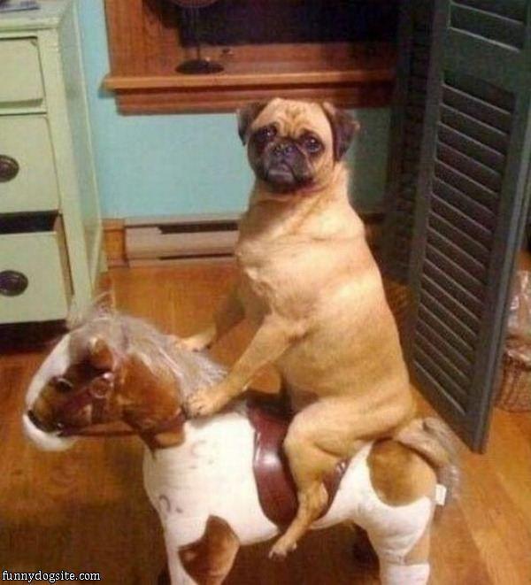 Riding my Pony