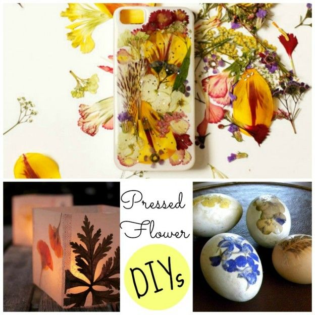 Here    more grown up easter egg decorating project that easy enough for kids to make get the tutorial from natural designs pressed flo also flower diy ideas pressing flowers rh pinterest