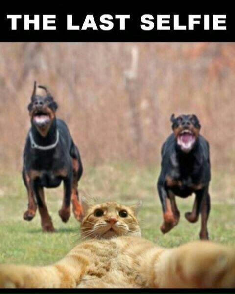 L Ultimo Selfie Perros Doberman Memes Perros Memes De Animales Tiernos