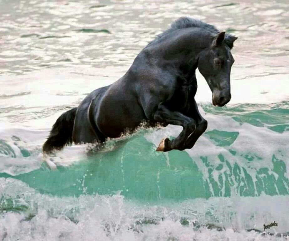 This is beautiful, and the Friesian's jet black coat contrasts perfectly with the emerald green of the waves.
