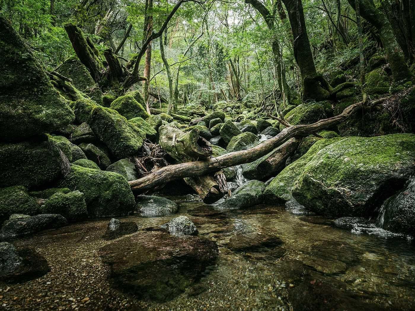 Yakushima The Forest Spirit Landscape Photography By Raphael Olivier Forest Spirit Landscape Photography Forest Landscape