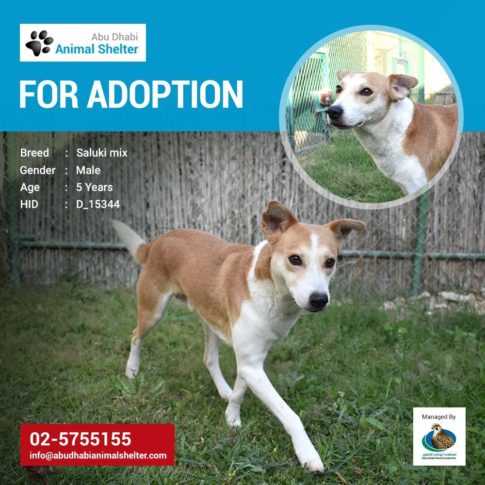 Abu Dhabi Animal Shelter Animal Shelter Animals Pets