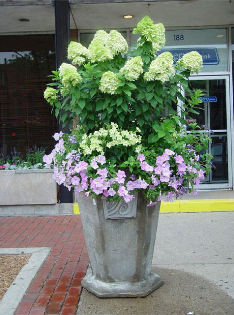 Portfolio Container Plants Hydrangea Container Planting Shade Plants Container