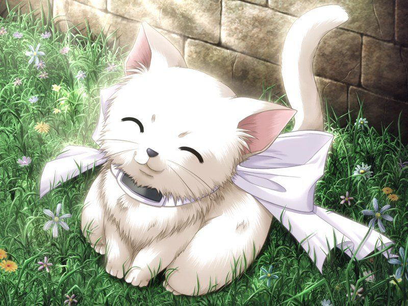 Chibi Galeria Anime Kitten Anime Animals Cute Anime Cat
