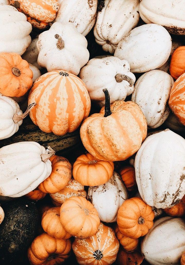 Instagram: @polly.florence #autumnseason