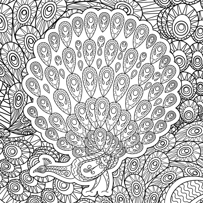 peacock coloring page adult - Peacock Coloring Pages For Adults