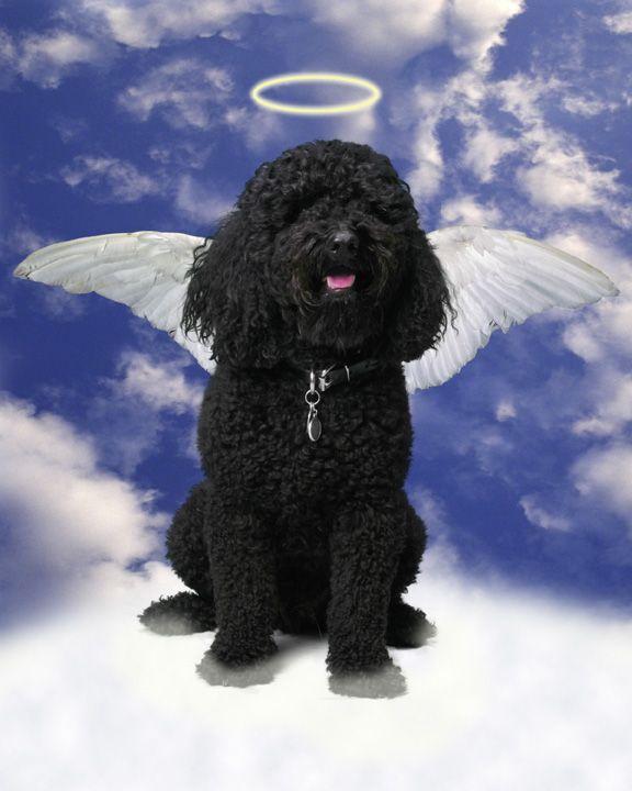 My angel boy