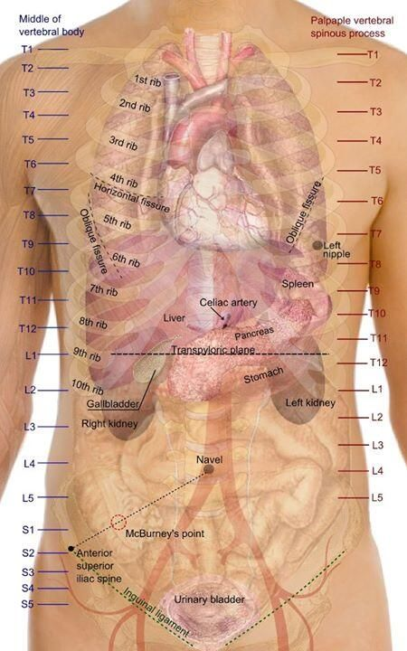 Medical Flashes on Medical Charts Pinterest Anatomy, Medical