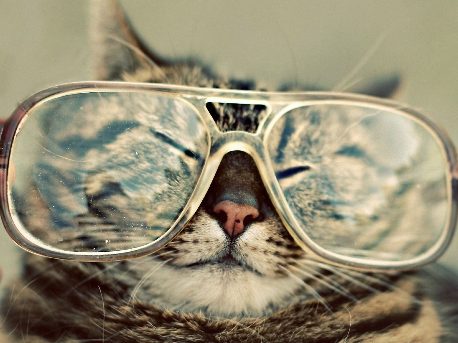 Animals iPhone 6 Plus Wallpapers - Funny Cat Eye Glasses iPhone 6 Plus HD  Wallpaper