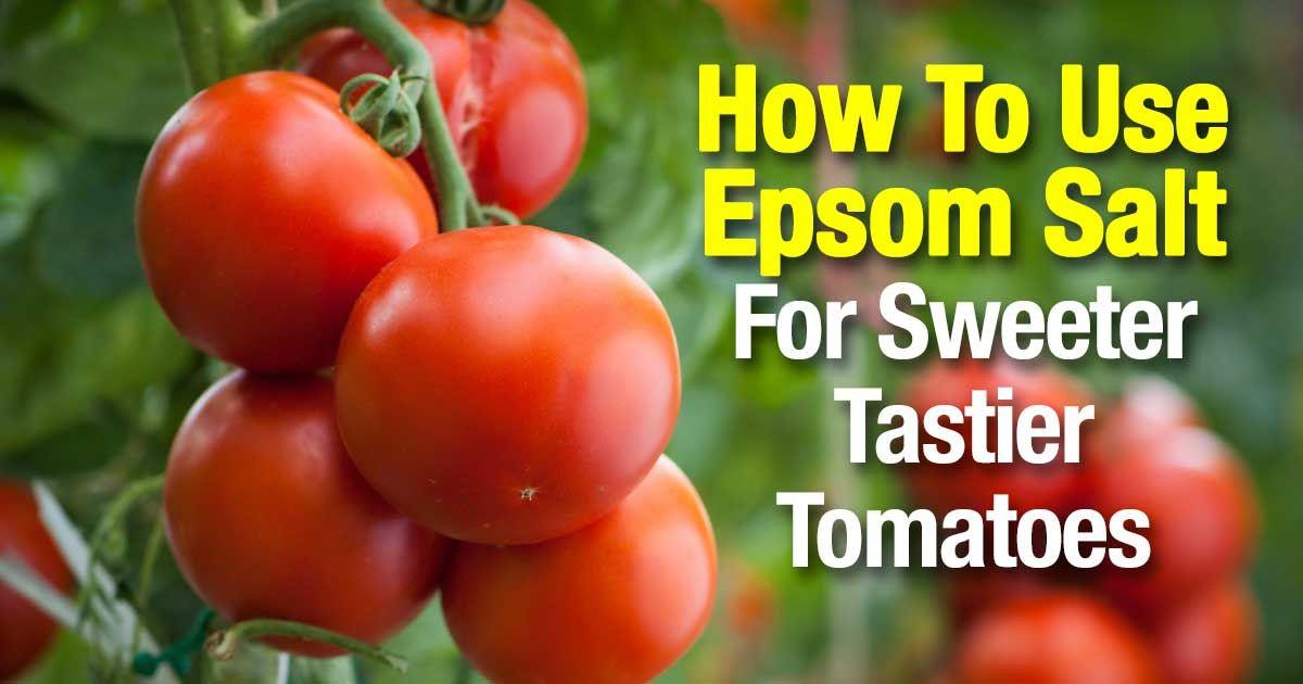 Epsom Salt For Tomatoes Make Them Sweeter And Tastier 400 x 300