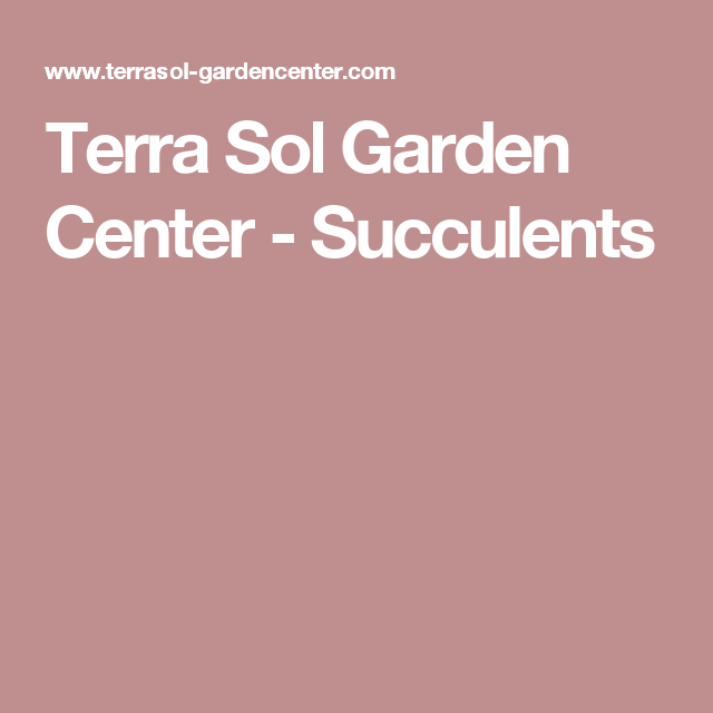 Terra Sol Garden Center   Succulents