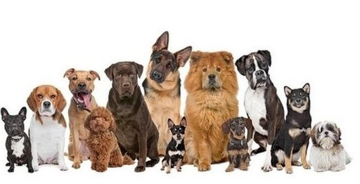 Does your dog have behavior problems? Find out how to train him with these easy to follow rules and get the obedient dog, you deserve. http://akovycvicitpsa.sk