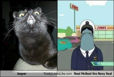 jasper is neal mcbeal the navy seal those are my muffins i