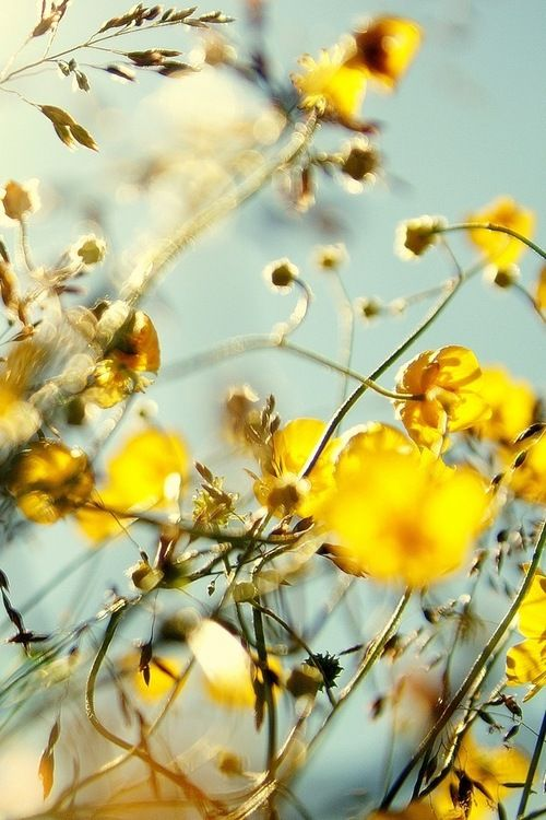 """""""What sunshine is to flowers, smiles are to humanity. These are but trifles, to be sure; but scattered along life's pathway, the good they do is inconceivable.""""  ― Joseph Addison"""