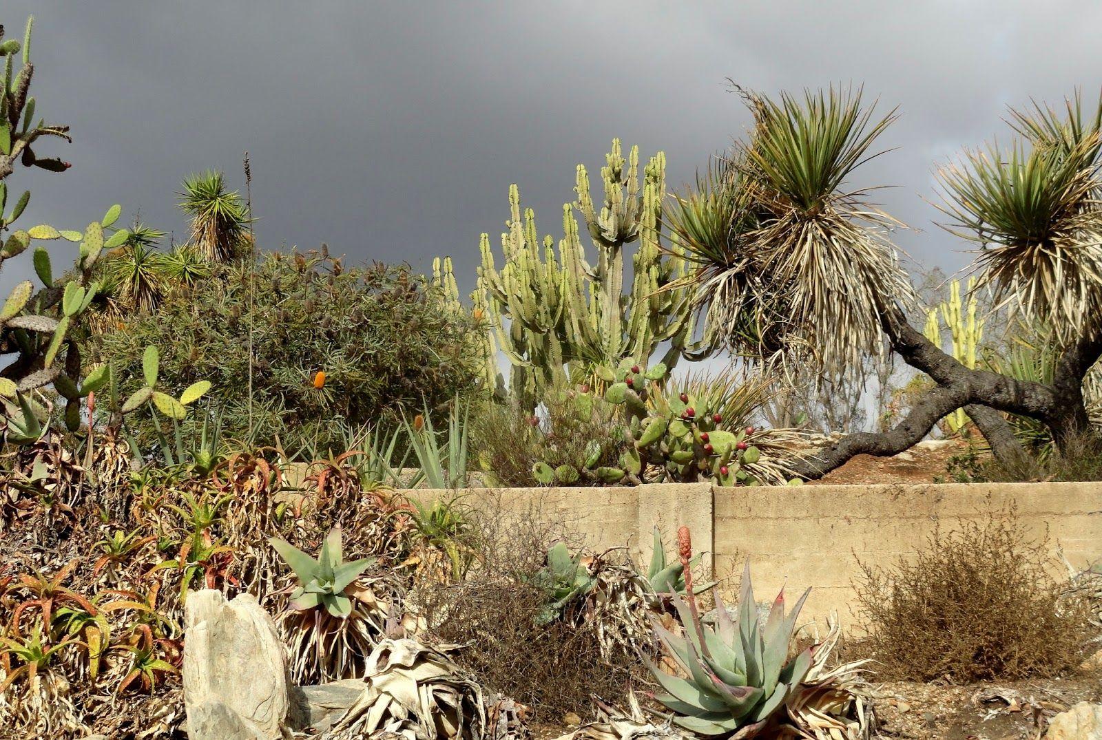 danger garden: The Old Cactus Garden at Balboa Park | desert garden ...