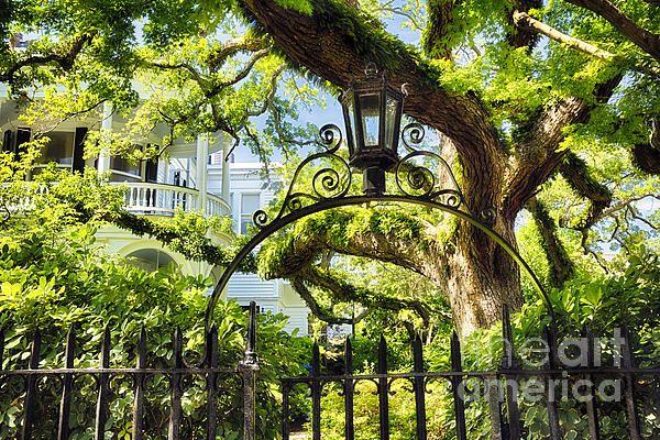 Charleston Villa Garden With Live Oak Tree By George Oze Live Oak Trees Live Oak Oak Tree