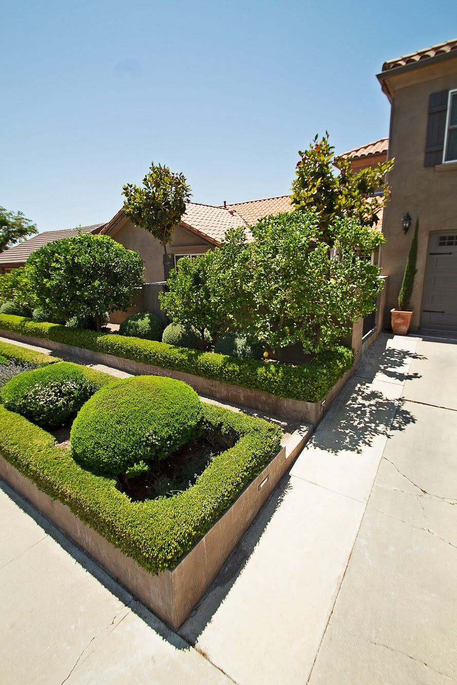 A Terrace Tract Home Garden Includes Topiaries And Lemon Trees