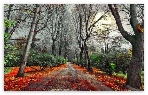 Dark Fall Wallpaper Autumn Gloomy Fall Wallpaper Desktop Wallpaper Fall Landscape Photography