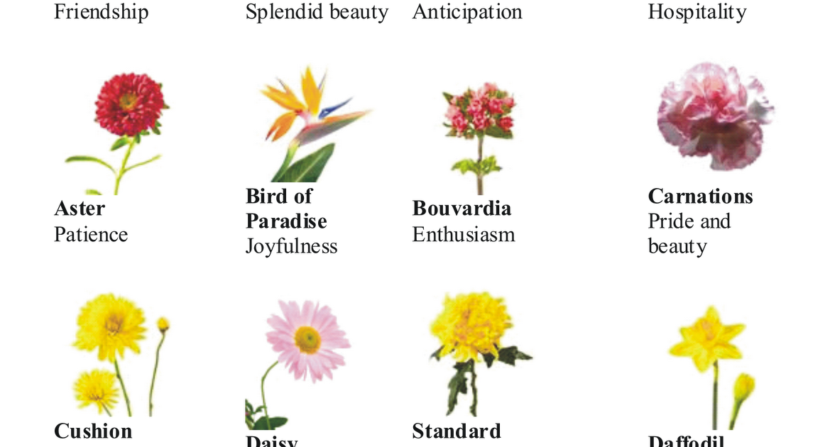 Source Floristdex Different Types Of Flowers Types Of Flowers Flower Names
