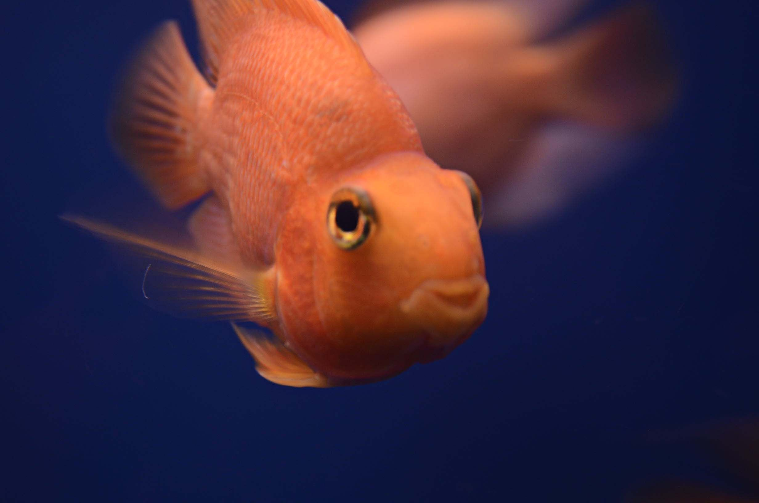 Aun teniendo un segundo se logran grandes cosas. #Photography #Fish #Zoo #Fotografia