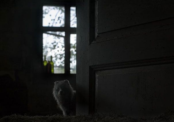 Abandoned House in the Woods Taken Over by Wild Animals