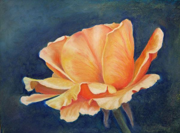 oil pastels for beginners sammy 39 s rose x post oil