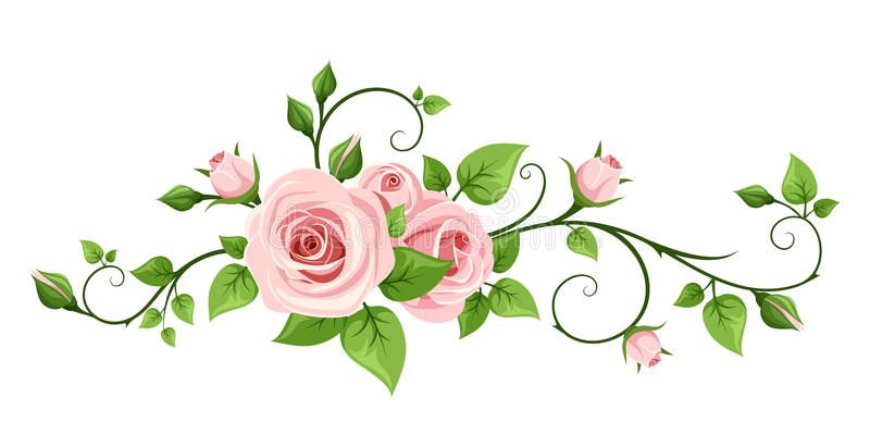 Pink Rose Vine Vector Illustration Vector Pink Rose Vine On A