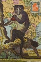 Apina / Vintage | Perromania - Postikortit netistä