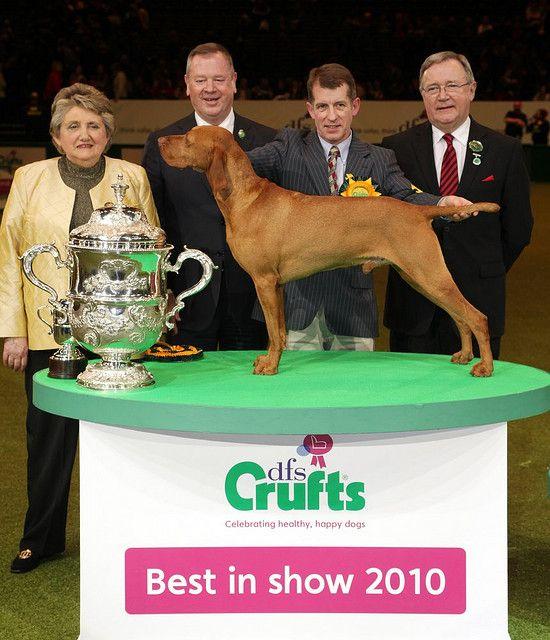 Dfs Crufts 2010 Day 4 Vizsla Most Beautiful Dog Breeds Dog Show