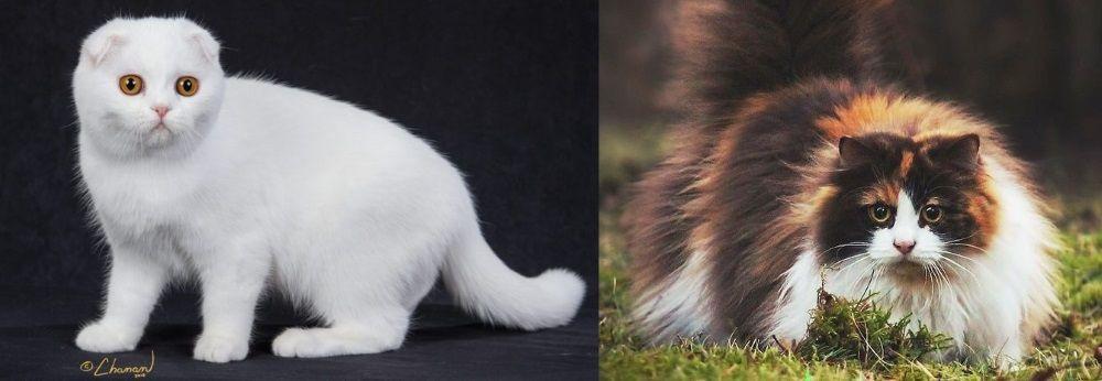 gatos-mais-caros-capa