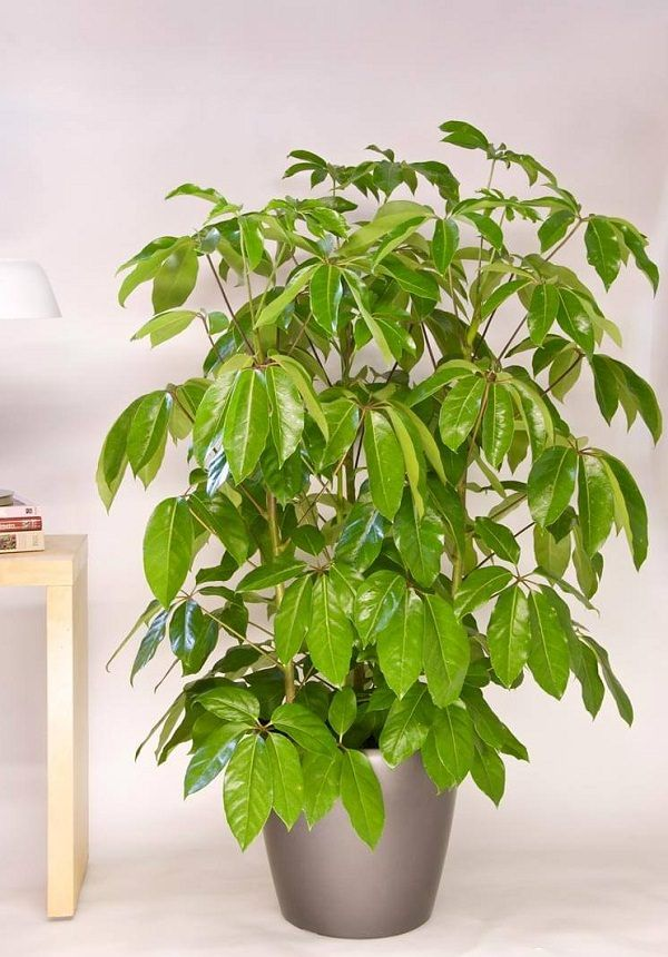 34 Poisonous Houseplants For Dogs And Cats House Plants