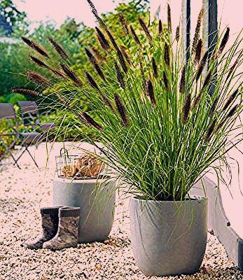 Photo of 85 Winterharte immergrüne Pflanzen – Liste und Übersicht – Gartendialog.de