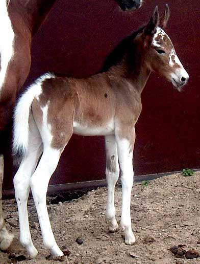 Wow!  What  a pretty mule baby.