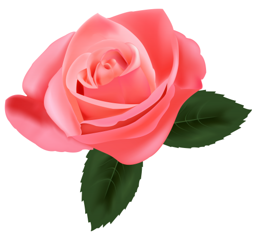 Pink Rose Png Clipart Flower Art Rose Clipart Pink Rose Png