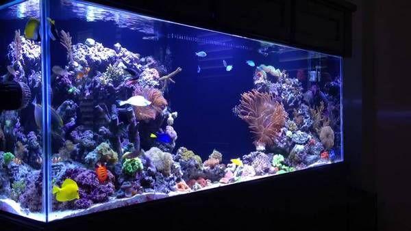 Nice Large Aquarium Saltwater Aquascape Elements #saltwater #aquarium |  Aquascapes | Pinterest | Saltwater Aquarium And Aquariums